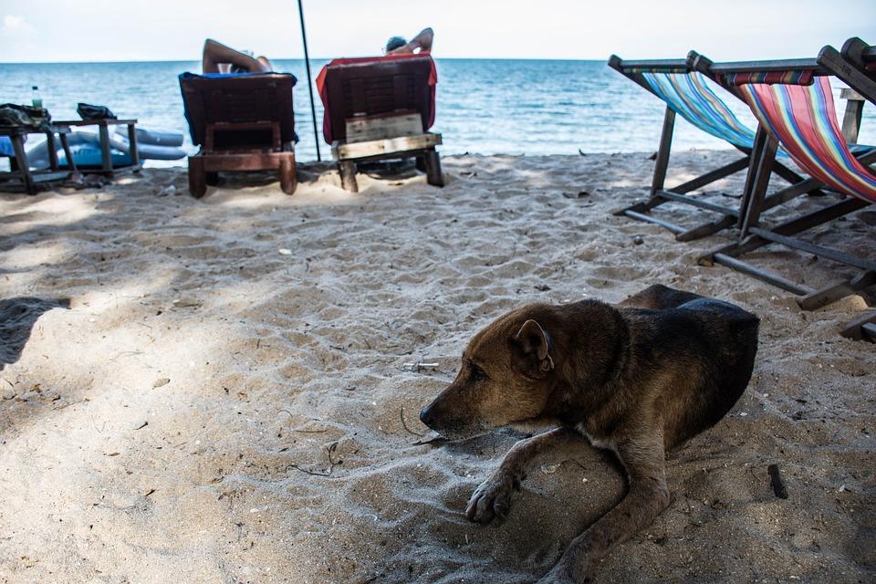 Urlaub im Süden: Diese Risiken bestehen für Hunde