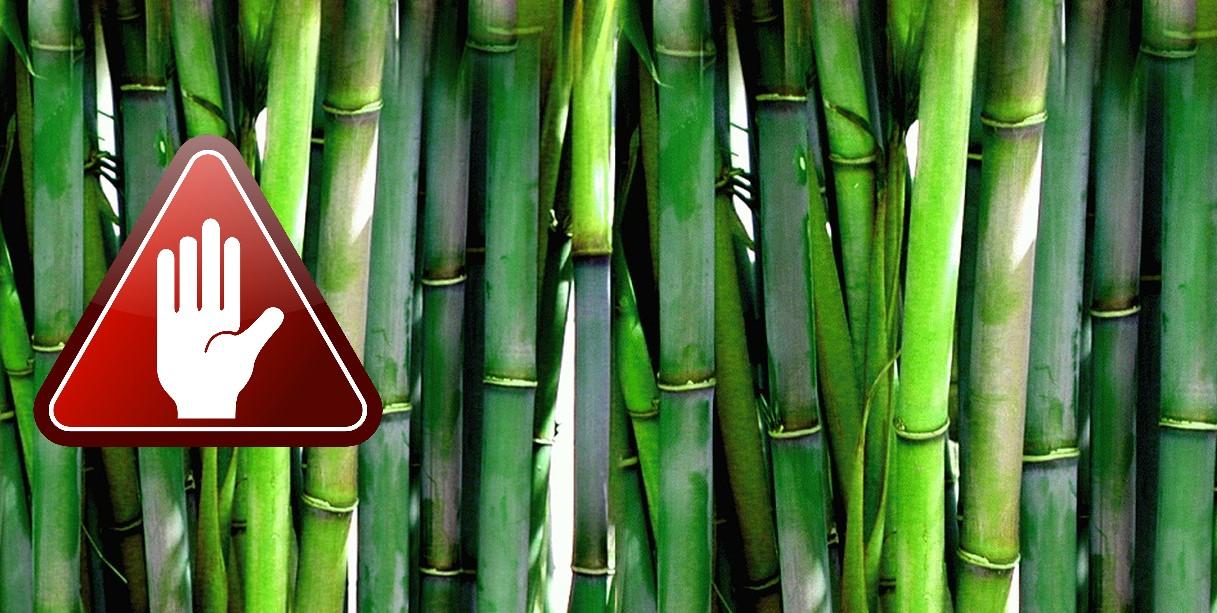Dm Bambus Geschirr